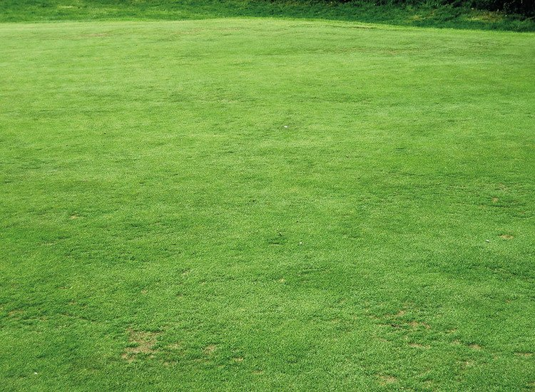 How To Buy Artificial Turf Prices Per Square Metre